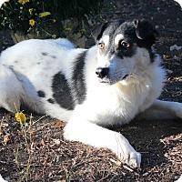 Adopt A Pet :: WANDA - Westminster, CO