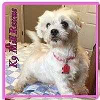 Adopt A Pet :: Erin - Hurst, TX