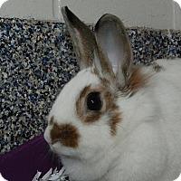 Adopt A Pet :: Delilah - Fairport, NY