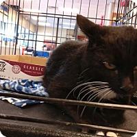 Adopt A Pet :: Rebecca - Avon, OH