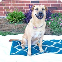 Adopt A Pet :: Tilly - Albemarle, NC