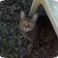 Adopt A Pet :: Spice - Tempe, AZ