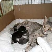 Adopt A Pet :: Sally, Sassy, Mark & Mitch - Island Park, NY
