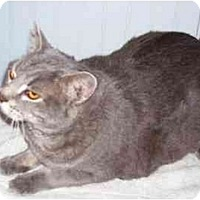 Adopt A Pet :: Dusty - Odenton, MD