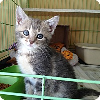 Adopt A Pet :: Tia - Island Park, NY