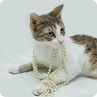 Adopt A Pet :: Hannah - Schererville, IN