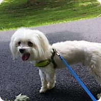 Adopt A Pet :: Marley - LEXINGTON, KY
