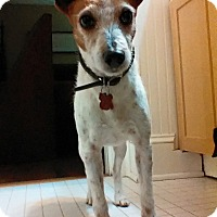 Adopt A Pet :: Guest Dog - Hannah - Decatur, GA