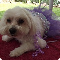 Adopt A Pet :: Coco*Adopted - Gainesville, FL