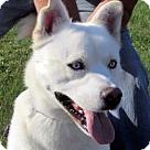 Adopt A Pet :: Kerr