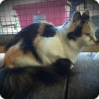 Adopt A Pet :: Hailey aka Blossom - Columbus, OH