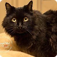 Adopt A Pet :: Cinder - Apache Junction, AZ