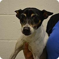 Adopt A Pet :: Leslie - Miami, FL