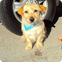 Adopt A Pet :: Benji - San Diego, CA