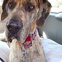 Adopt A Pet :: Lucy - Huntersville, NC