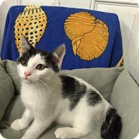 Adopt A Pet :: Tonka - Hampton, VA