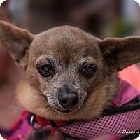 Adopt A Pet :: Ruby - San Marcos, CA