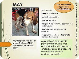 Coonhound Mix Dog for adoption in Mount Gilead, Ohio - May