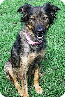 German Shepherd Dog Mix Dog for adoption in Watauga, Texas - Paris