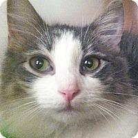 Adopt A Pet :: Nikki Gray - New York, NY