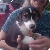 Adopt A Pet :: Heron - Kendall, NY