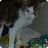 Adopt A Pet :: Bea Arthur - Hamburg, NY