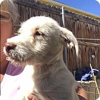 Adopt A Pet :: Fonzy - Thousand Oaks, CA