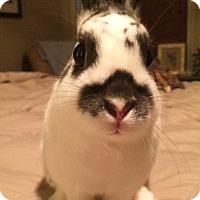 Adopt A Pet :: Lady Mae - Watauga, TX