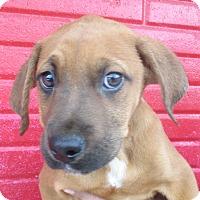Adopt A Pet :: Chelsea - Reeds Spring, MO