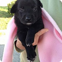 Adopt A Pet :: Baby Bear - Newport, KY