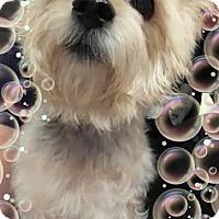 Adopt A Pet :: Lexington - Dallas, TX