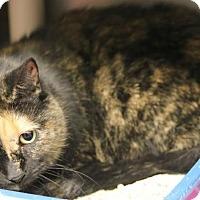 Adopt A Pet :: Leaha - Camden, DE