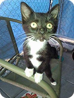 Adopt A Pet :: Sierra  - Snow Hill, NC