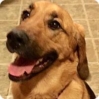 Adopt A Pet :: Layla - Adoption Pending! - Hillsboro, IL
