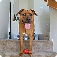 Adopt A Pet :: Lyla - Mission Viejo, CA