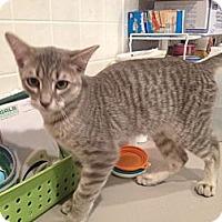 Adopt A Pet :: Wyatt - Byron Center, MI