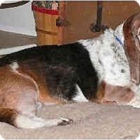 Adopt A Pet :: Maxim - Phoenix, AZ