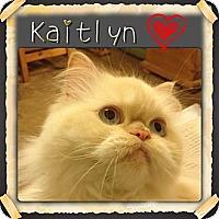 Adopt A Pet :: Kaitlyn - Beverly Hills, CA