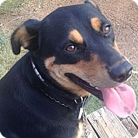 Adopt A Pet :: Baby - Austin, TX