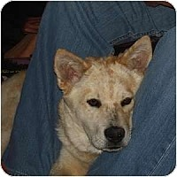 Adopt A Pet :: LeAnn - Phoenix, AZ