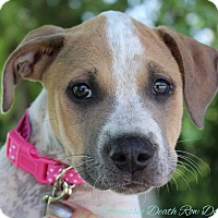 Adopt A Pet :: Niki - Mount Juliet, TN