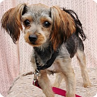 Adopt A Pet :: Cricket - Redondo Beach, CA