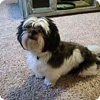 Adopt A Pet :: Tucker 3-pending adoption - East Hartford, CT