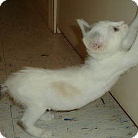Adopt A Pet :: Lacey - Columbus, OH