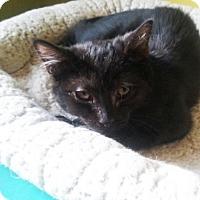 Adopt A Pet :: Onyx - Hudson, NY