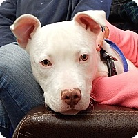 Adopt A Pet :: Little Mickey - Long Beach, NY
