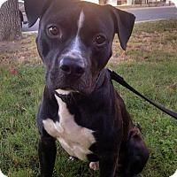 Adopt A Pet :: Buddy - Sunnyvale, CA