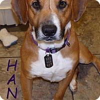 Adopt A Pet :: Hank - Woodinville, WA