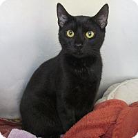 Adopt A Pet :: Google - Bensalem, PA