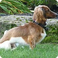Adopt A Pet :: Brady - Sudbury, MA